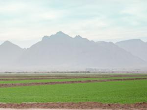 Farm - Desert Chemical